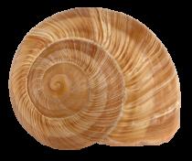 Coquille escargot Bourgogne n°10 c1440